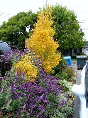 Landscape Design And Build Arroyo Grande San Luis Obispo